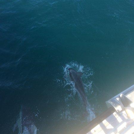 Refuge Cove Cruises照片