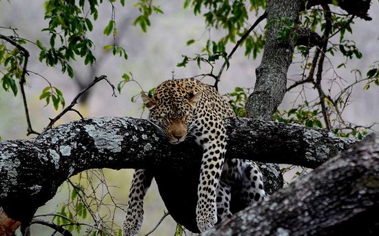Kafue National Park Photo