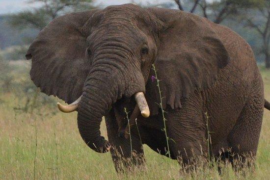 Fortes Africa: on patrol