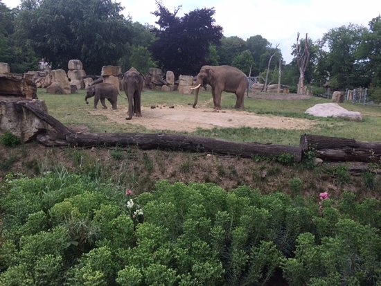 Prague Zoo: 2 elephants were born in this zoo in 2016!