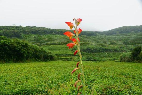 Fuding, Kina: Yushan Island