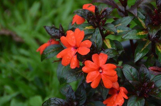 Blossom Hydel Park: Blossom Park