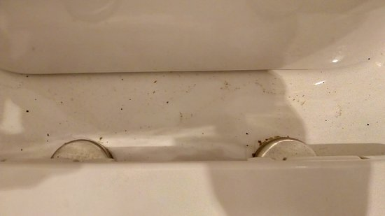 The Harvard Inn: Dust and grit on toilet