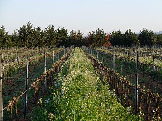 Domaine de Sulauze : Vignes en biodynamie
