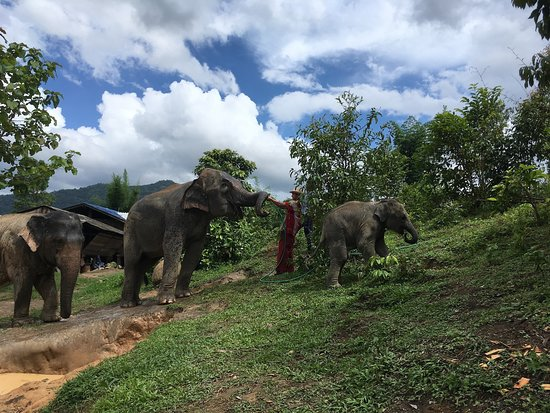 Karen's Tribe Native Elephants: cooling down