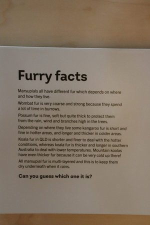 Koala Hospital: Furry facts