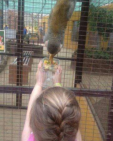 Monkey Park Photo