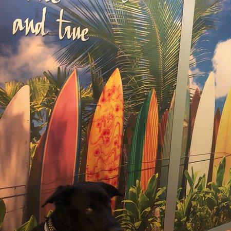 Duke Restaurant: photo1.jpg