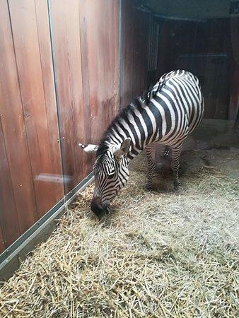 Zoo Basel Photo