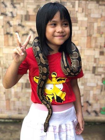 Borneo Ant House : tame python