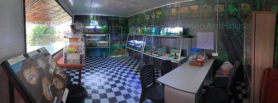Borneo Ant House : ant lab