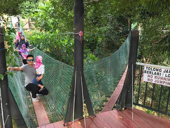 写真Borneo Ant House枚