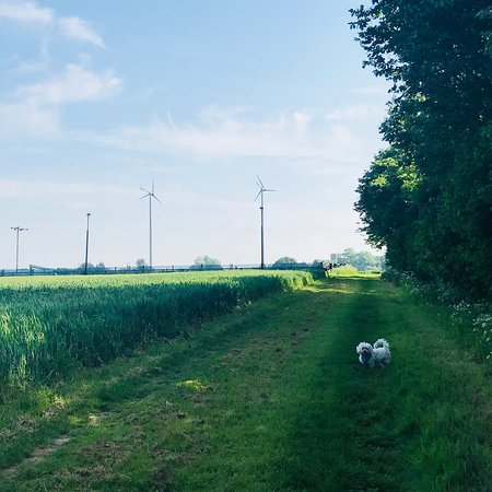 Grange Farm Campsite: Lovely stay over the May bank holiday weekend