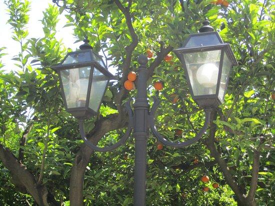 Villa Irlanda Grand Hotel : Fancy an orange?