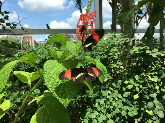 Tennessee Aquarium: Butterfly Garden - Ocean JOurney
