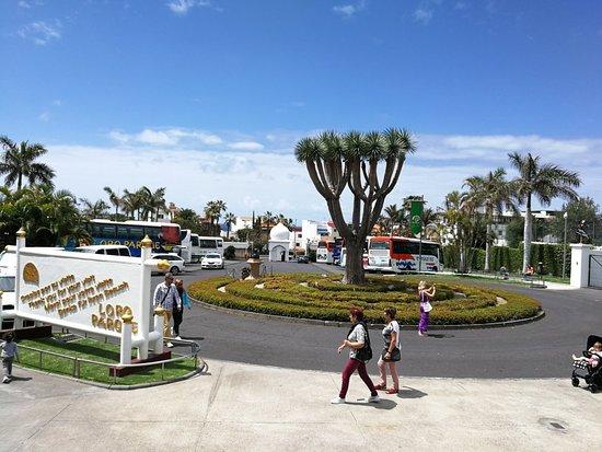 鹦鹉公园照片