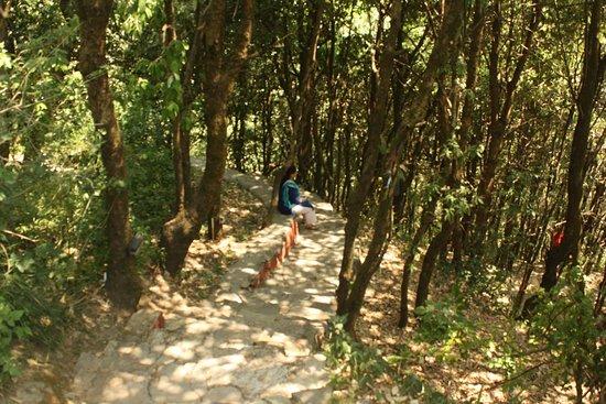 Jungle Lore Birding Lodge: WAY TO KALIJ COTTAGE