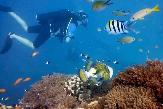 FUN DIVERS ZANZIBAR – Dive site Kichwani at Mnemba, Zanzibar