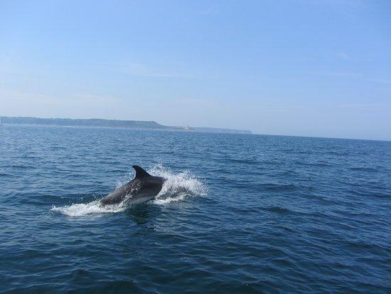 Saint-Cast le Guildo, Prancis: Ce jour là les dauphins étaient avec nous.
