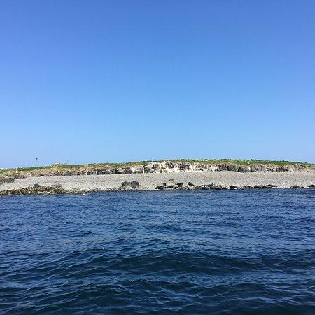 Billy Shiel's Boat Trips Photo
