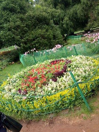 Botanical Gardens: Flower arrangement