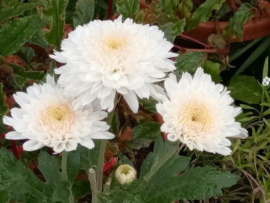 Botanical Gardens: Flower Show
