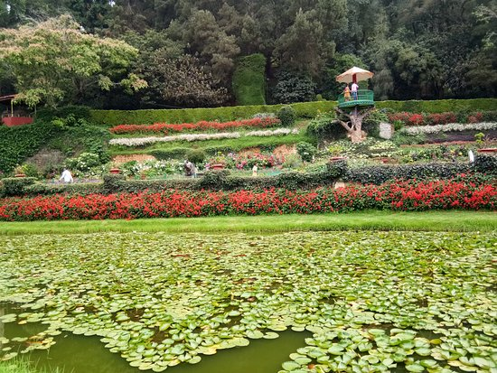 Botanical Gardens: View point from where you can take good photos