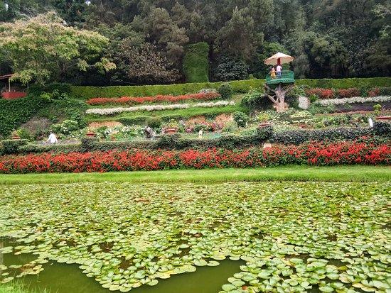 Botanical Gardens照片