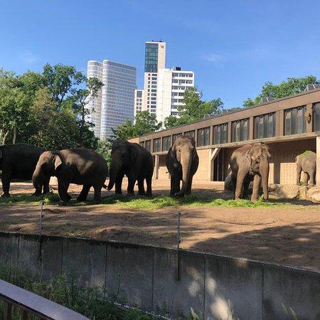 Zoo Berlin ภาพถ่าย