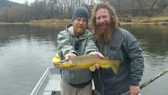 Searcy, AR: Nice brown
