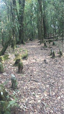 Mawphlang Sacred Forest照片