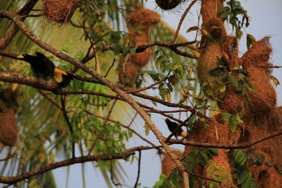 Orinoco Delta, Venezuela: Wild Fauna