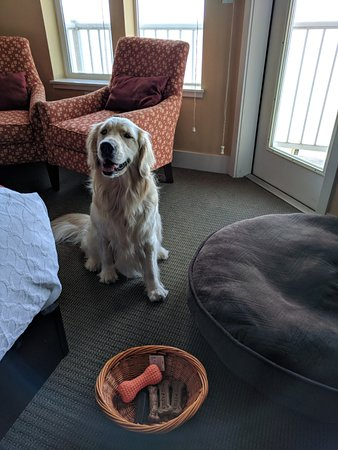 Cannery Pier Hotel: My dog loved the treats and toy.