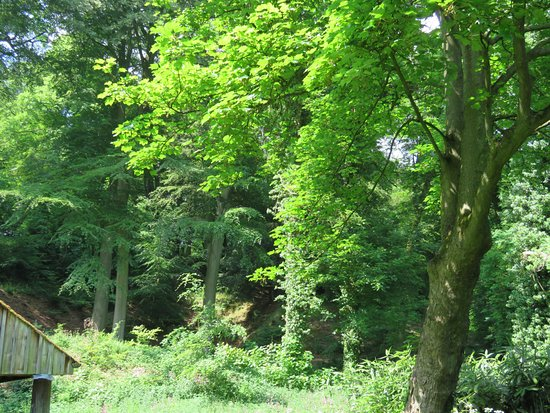 Renishaw Hall And Gardens : Woodland near the lake