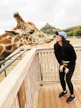 Malibu Countryside Wine Hike: Stanley the Giraffe!
