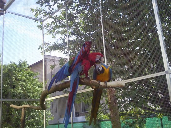 Experiences with seasoned parrots