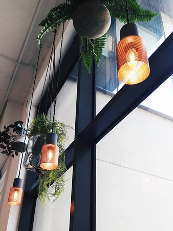 Nutbutter: Trendy plants hanging from the ceiling lol
