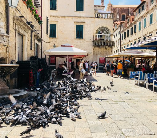 Studio Stradun: Birds in the piazza