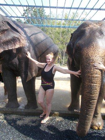 Green Elephant Sanctuary Park : Elephant and human showers