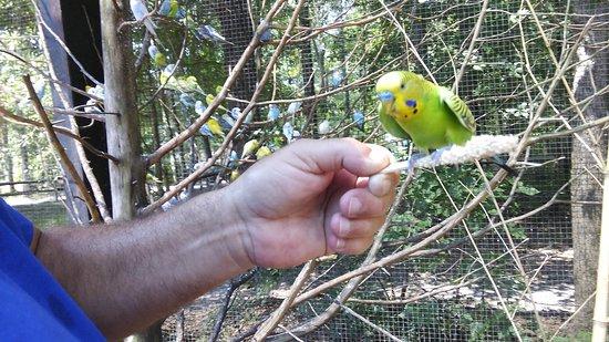 Scotland Neck, North Carolina: feed the birds.