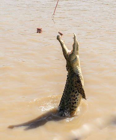 Darwin's Best Jumping Crocodile Cruise: nearly got it