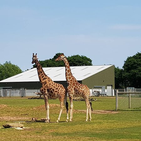 Yorkshire Wildlife Park ภาพถ่าย