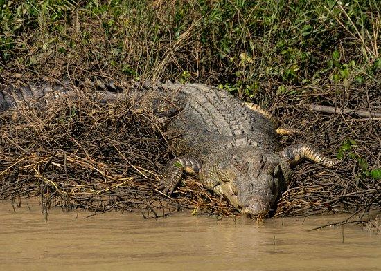 Darwin's Best Jumping Crocodile Cruise: sun baking