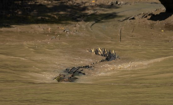 Darwin's Best Jumping Crocodile Cruise: on my way