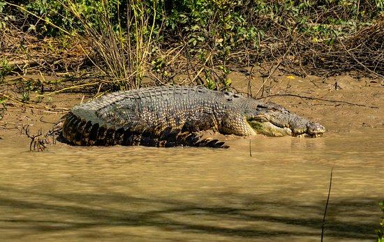 Darwin's Best Jumping Crocodile Cruise: will I or won't I