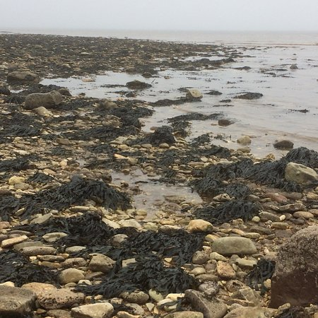 Living Seas Centre: Had a lovely time rockpooling despite the mist at south landing followed by activities and coffe