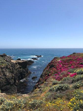 The Sea Ranch, CA: Sea Ranch Coastline with African Ice Plant