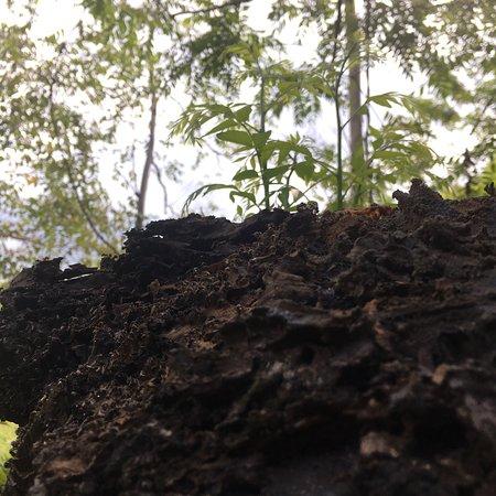 Ilog Maria Honeybee Farm: photo8.jpg