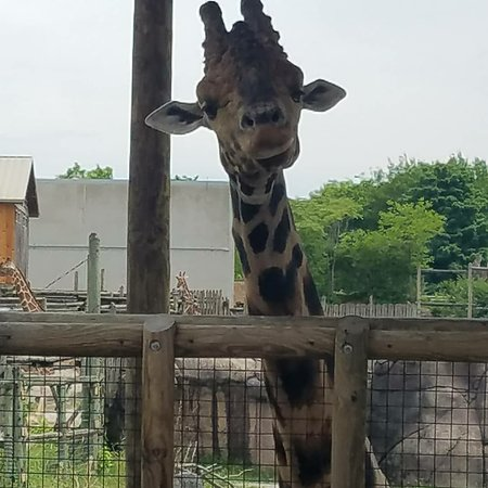 Zoo Knoxville照片