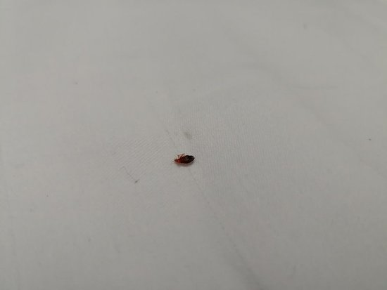 Clean room friendly staff but bed bug
